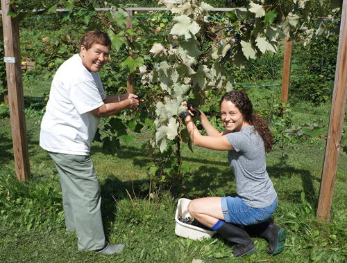 First grape harvest at the Eco-Justice Center in Racine, Wisconsin. Picking grapes (from left): Sister Janet Weyker, OP (Racine) and Sister Christin Tomy, OP (Sinsinawa).