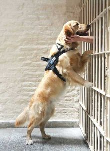 Sr. Pauline's dog Pax in Argentina. Prisoners can't touch one another in the United States, and the staff are not allowed to touch prisoners, but the dogs can love them, giving them licks and wags. The dogs live in the prison with the inmates.